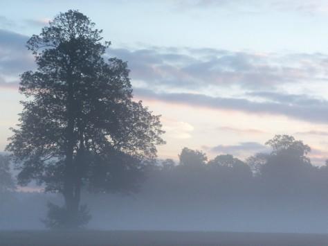 07 tree in mist